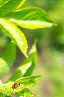 Grüne frische grasblätter mit selektivem fokus und marienkäfer im fokus während des positiven sonnigen tages
