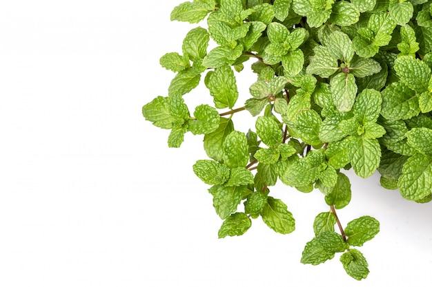 Grüne frische pfefferminzblätter