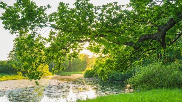Grüne frühlingswiese mit üppigem gras und einer eiche über einem teich.
