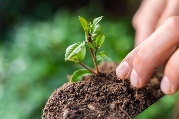 Grüne gartenschaufel auf unschärfenaturhintergrund mit junger pflanze
