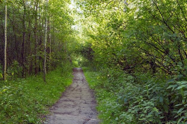 Grüne gasse mit ländlichem fußweg