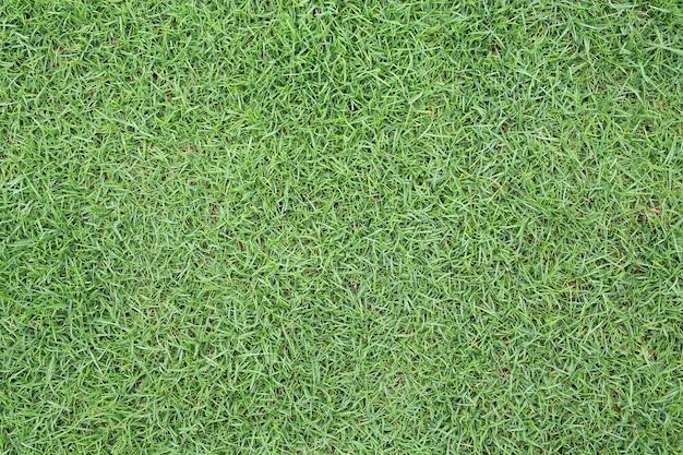 Grüne grasbeschaffenheit als hintergrund