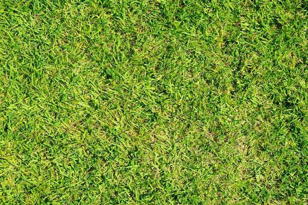 Grüne grasbeschaffenheit für hintergrund. grünes rasenmuster und texturhintergrund. nahansicht.