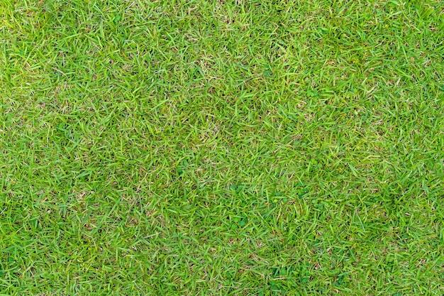 Grüne grasbeschaffenheit. grüner rasenhofbeschaffenheitshintergrund. nahansicht.