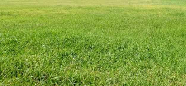 Grüne grasbeschaffenheit