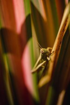Grüne heuschrecke thront tagsüber auf braunem stiel in nahaufnahme