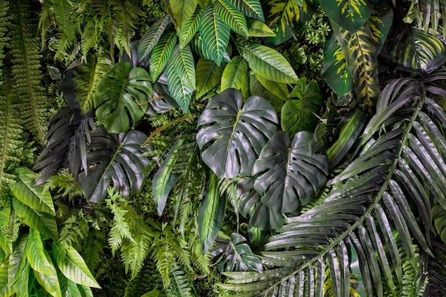 Grüne hintergrundkonzepte tropische palmblätter, dschungelblattabschluß oben schöner tropischer blatthintergrund, beschaffenheit grüne blumenkarte für design grüne tropische blätter des monsters