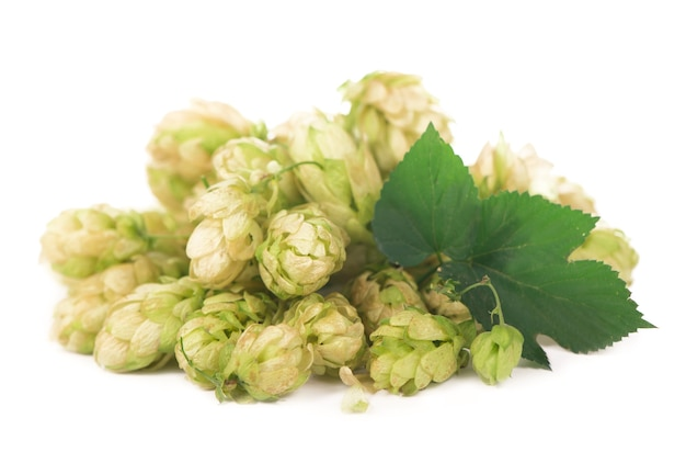 Grüne hopfenzapfen isoliert auf weißer, brauender, natürlicher bierproduktion