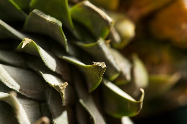 Grüne hülsennahaufnahme der ananas