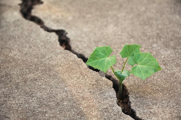 Grüne jungpflanze, die aus den gebrochenen grund wächst.