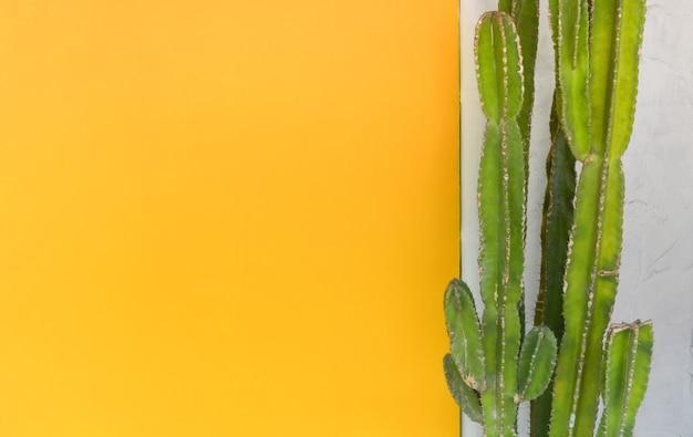 Grüne kaktusbäume gegen zementwand mit gelbem farbigem wandhintergrund, kopienraum