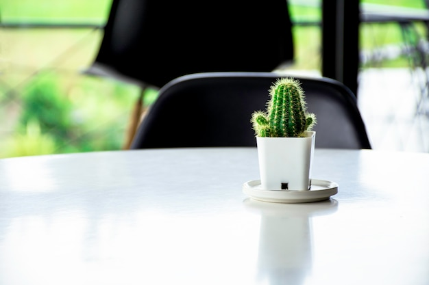 Grüne kaktuspflanze auf weißem schreibtischhintergrund mit leerem raum mit flare-licht am morgen, süßer mini-kaktus auf weißem hintergrund, sukkulenten im topf auf dem tisch, weißer schreibtischhintergrund für text