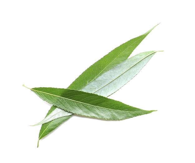 Grüne korbweidenblätter auf weißem hintergrund