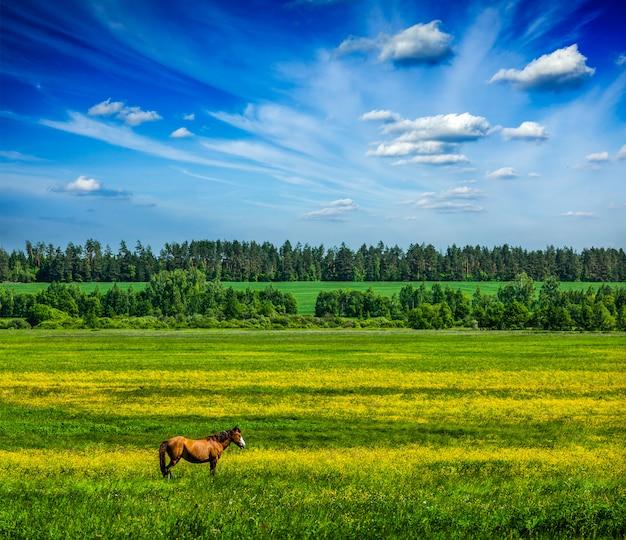 Grüne landschaft der frühlingssommerlandschaft mit pferd