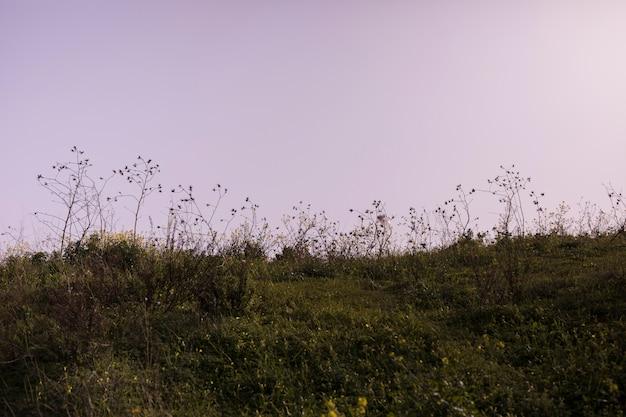 Grüne landschaft gegen dramatischen himmel
