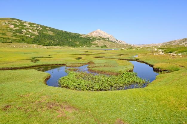 Grüne landschaft in korsika (marke von nino)