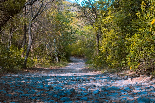 Grüne landschaft waldland blatt wanderung landschaftlich