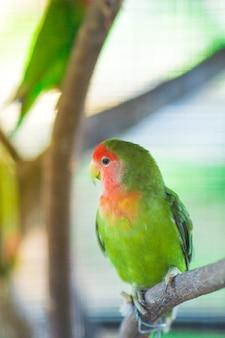 Grüne lovebirdpapageien, die auf einem baumast sitzen