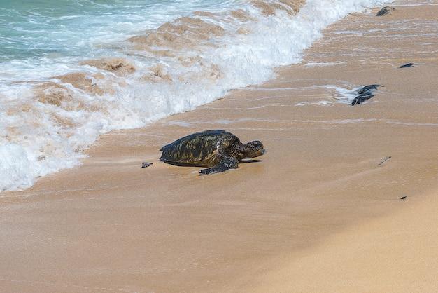 Grüne meeresschildkröte am strand