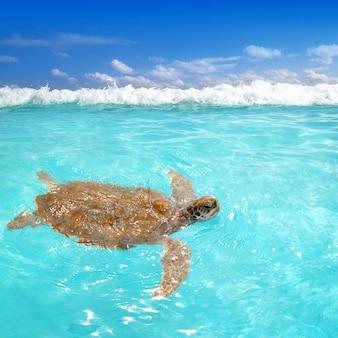 Grüne meeresschildkröte chelonia mydas karibisch