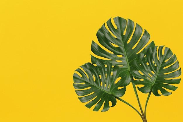 Grüne monstera-blätter auf gelbem kunstpapierhintergrund und kopienraum für das design in ihrer arbeit.