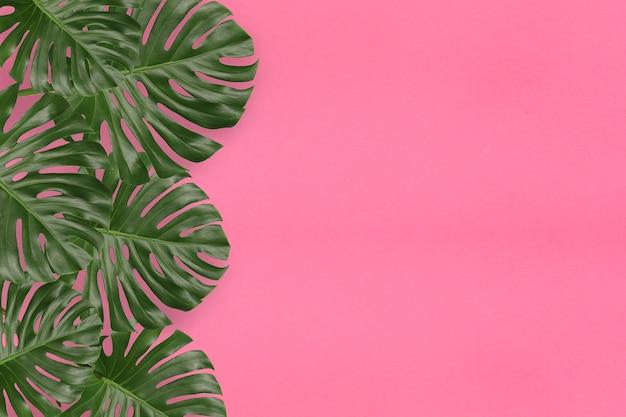 Grüne monstera-blätter auf rosafarbenem hintergrund und kopienraum für das design in ihrer arbeit.