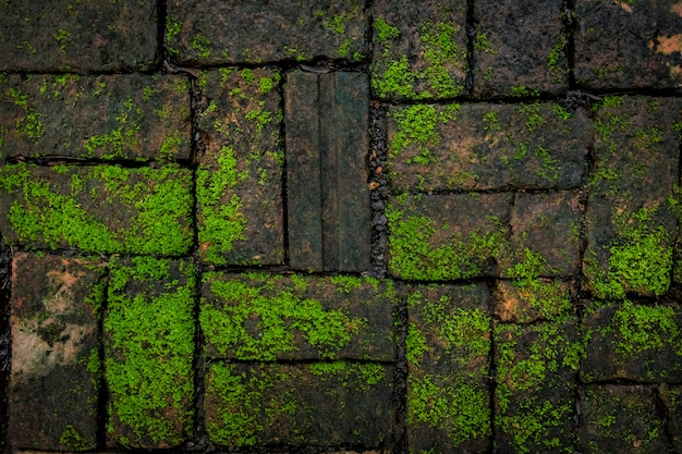 Grüne moos- und ziegelsteinhintergrundbeschaffenheit schön in der natur.