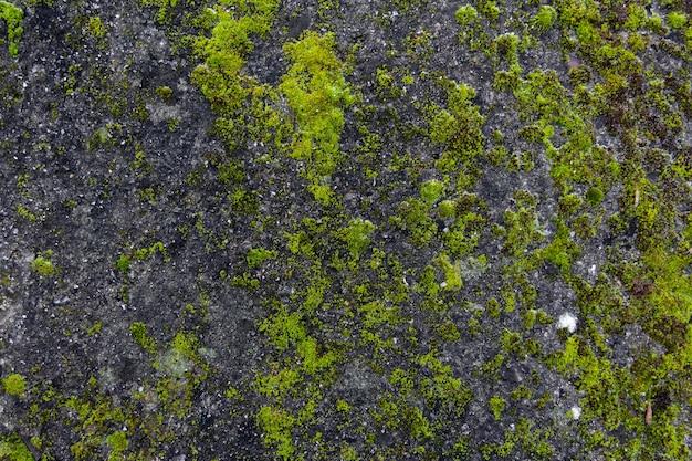 Grüne moosbeschaffenheit auf grauem stein. organischer hintergrund.