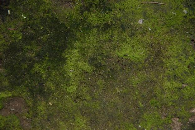 Grüne moosbeschaffenheit und -hintergrund.