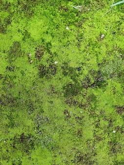 Grüne mooshintergrundbeschaffenheit schön in der natur