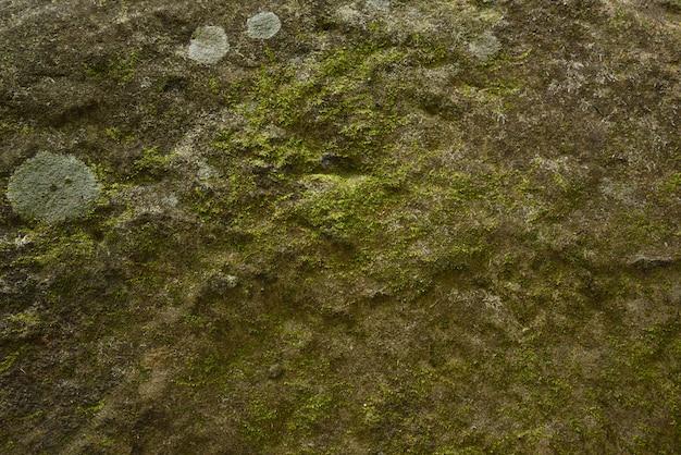 Grüne mooswand auf stein