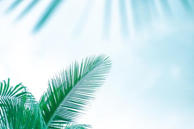 Grüne palmblätter auf hellblauem hintergrund, getönte schablone für text, rahmen.