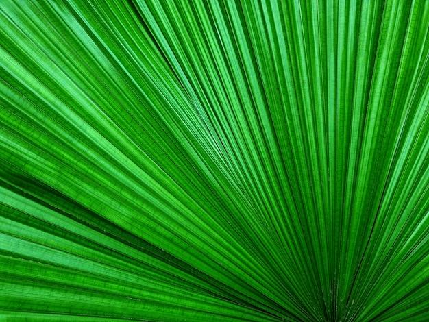 Grüne palmblätter zeichnen hintergrund und texturen