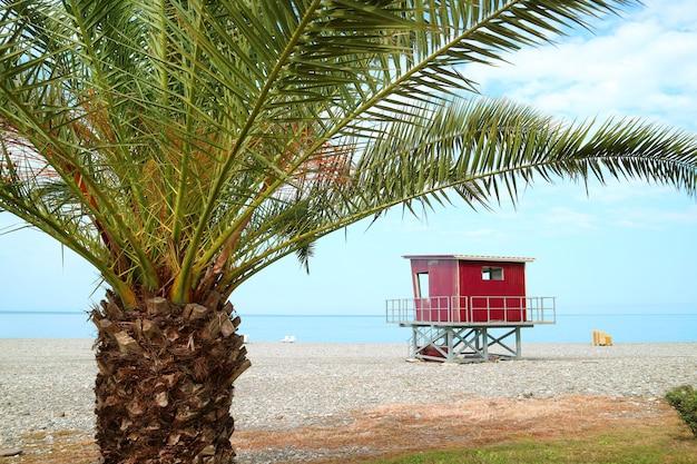 Grüne palme am leeren strand mit roter rettungsschwimmerhütte