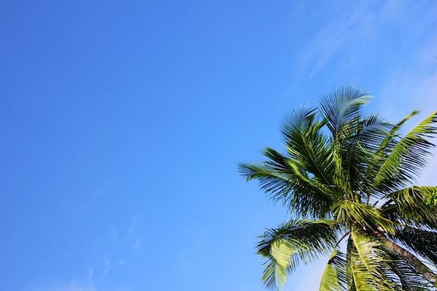 Grüne palme gegen den blauen himmel an einem sonnigen tag.