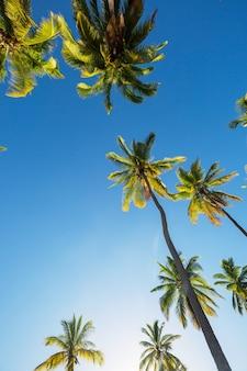Grüne palmen am tropischen strand