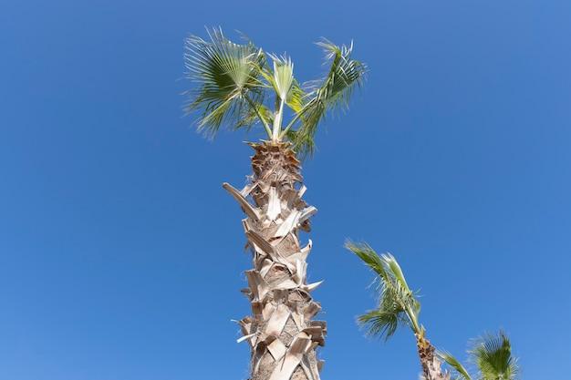 Grüne palmen und blauer himmel