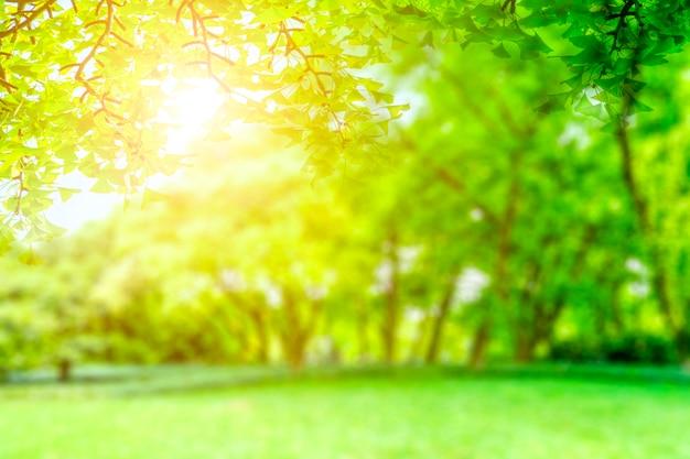 Grüne parkansicht
