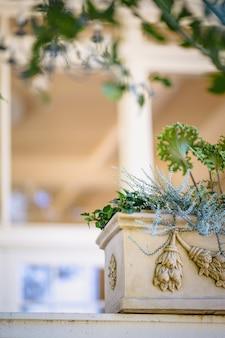 Grüne pflanze auf weißem keramiktopf