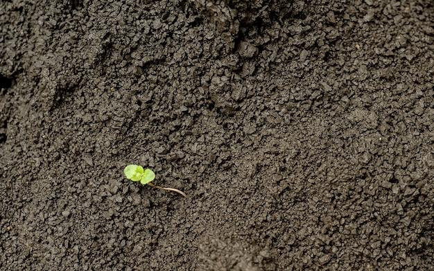 Grüne pflanze, die in einem boden wächst. hintergrund mit kopierraum. landwirtschaft, ökologischer gartenbau, pflanzen oder ökologiekonzept. junge sprossen, wachsende sämlinge. neues lebenskonzept