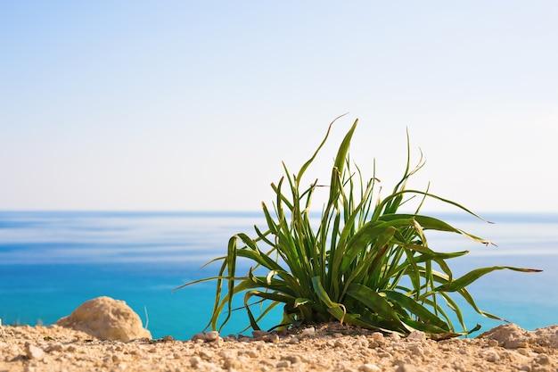Grüne pflanze gegen strahlend blaues meer als natürlicher frühlings- oder sommerhintergrund.