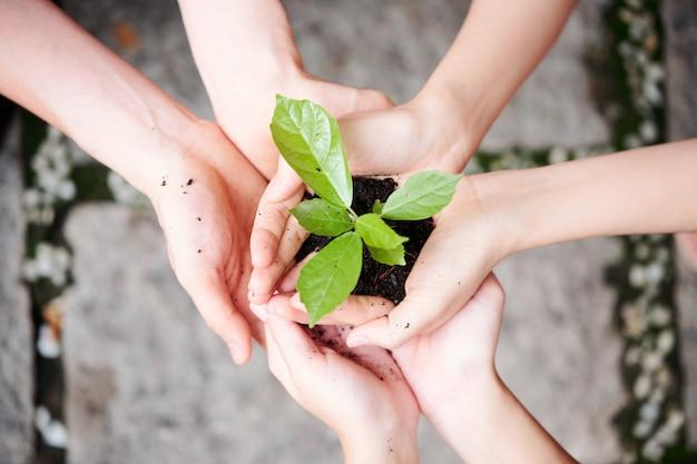 Grüne pflanze in den händen der menschen