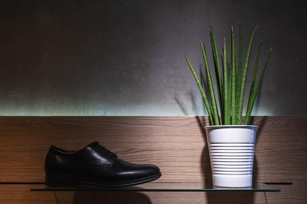 Grüne pflanze in einem topf mit herrenschuhen auf dunklem hintergrund.