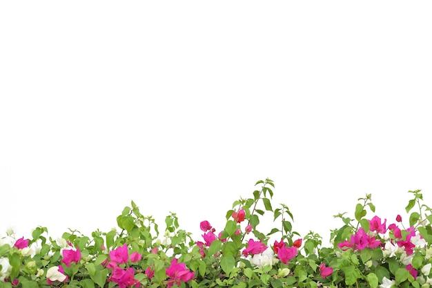 Grüne pflanze mit rosa blume auf weißer isolierter oberfläche