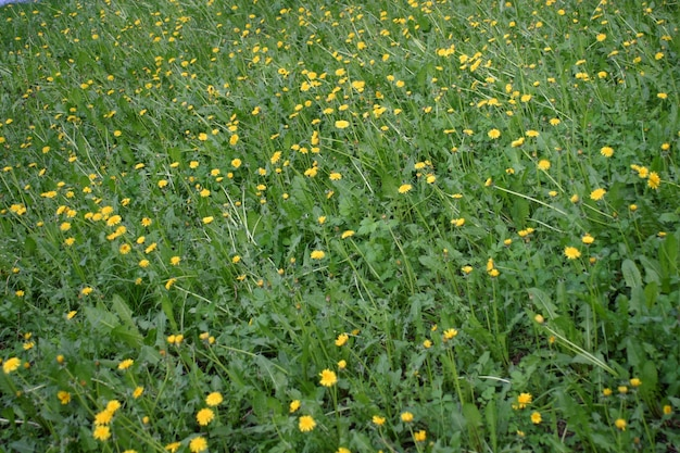 Grüne pflanze textur