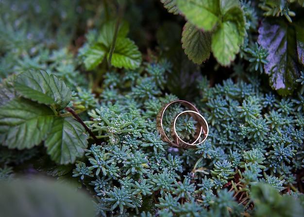 Grüne pflanze und trauringe
