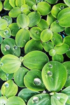 Grüne pflanze und wassertropfen