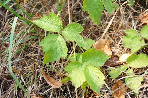 Grüne pflanzen, die auf dem boden über trockenem gras wachsen