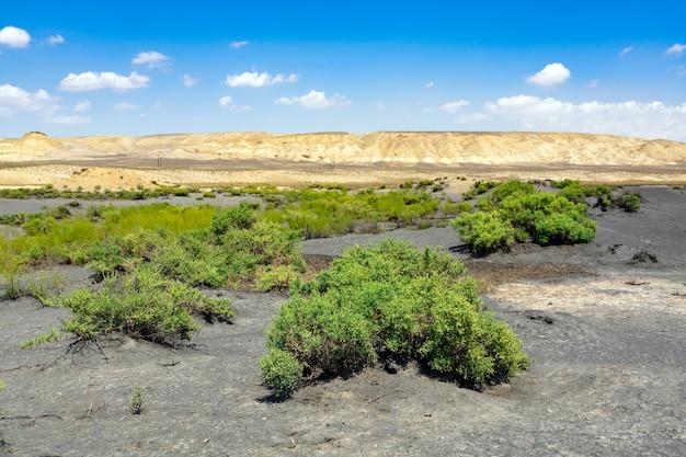 Grüne pflanzen in der wüste, oase