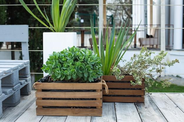 Grüne pflanzen in holzkisten im freien in einem café